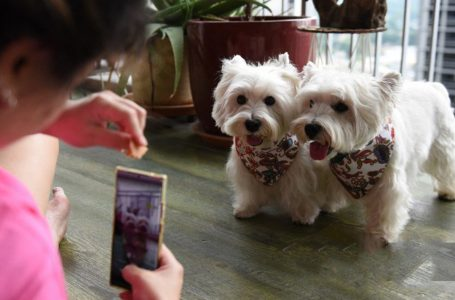 Digital Pets: A New Influencer Trend in Singapore