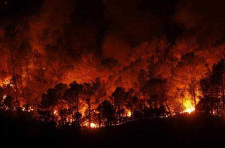 Spanish Wildfire Started 'Intentionally': Officials